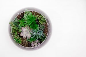 pot of succulents